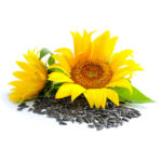 Huile végétale de tournesol certifiée bio